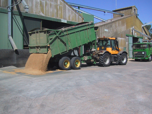 Emptying grain
